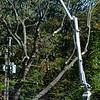 1021 tree trim