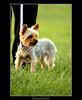 Formal Pup