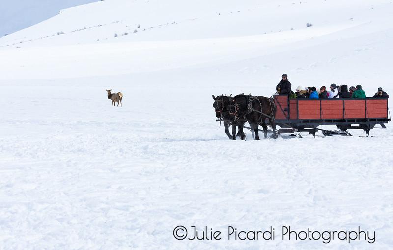 A two-horse open sleigh.