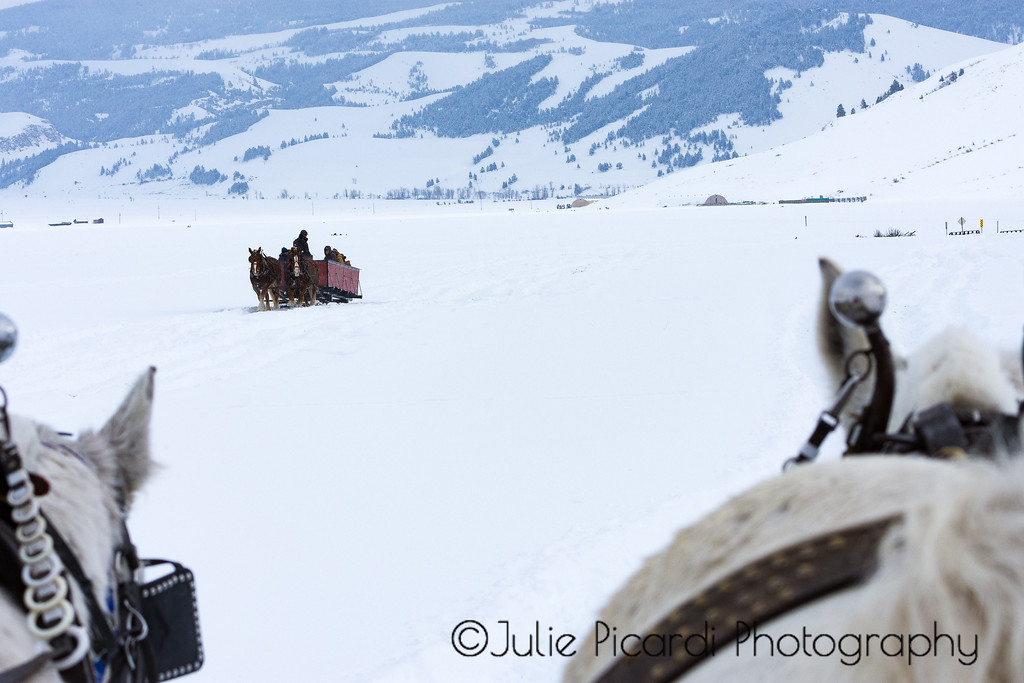 Sleigh Ride through the elk refuge in Teton National Park.