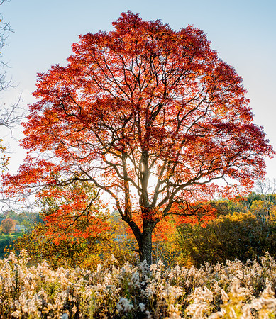 Tara-Smith-October-Morning-Autumn-Tree-West-Virginia-3