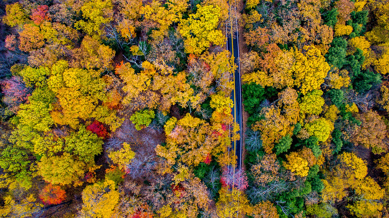 Above-Coopers-Rock-West-Virginia-Drone-10
