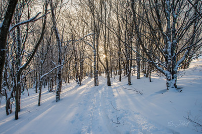 Cross-Country-Skiing-White-Grass-Canaan-Valley-West-Virginia-New-Years-Eve-50