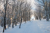 Cross-Country-Skiing-White-Grass-Canaan-Valley-West-Virginia-New-Years-Eve-48
