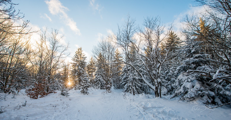 Cross-Country-Skiing-White-Grass-Canaan-Valley-West-Virginia-New-Years-Eve-44