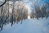 Cross-Country-Skiing-White-Grass-Canaan-Valley-West-Virginia-New-Years-Eve-49