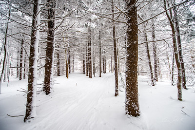 Cross-Country-Skiing-White-Grass-Canaan-Valley-West-Virginia-New-Years-Eve-12