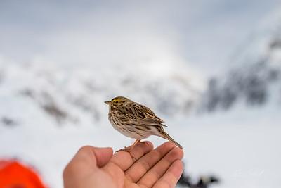Alaska-4145