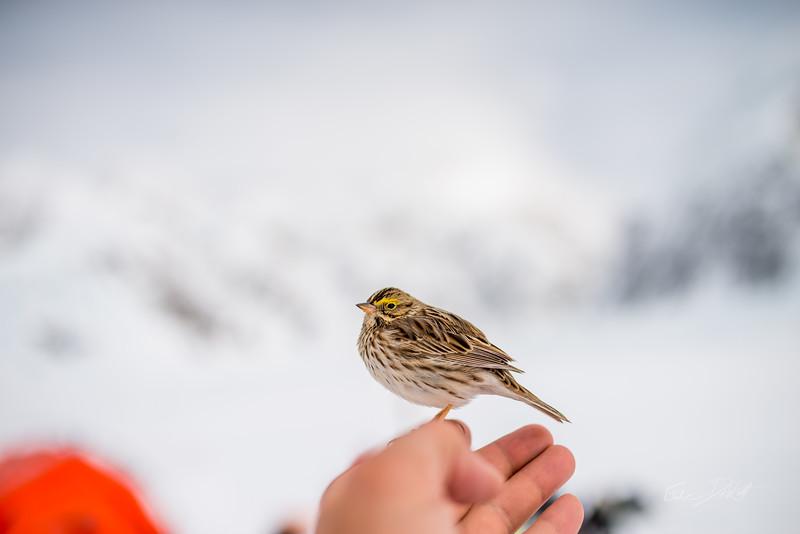 Alaska-4137