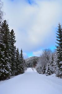 Vägen runt Agnsjön på vintern -  Road through snowy forest