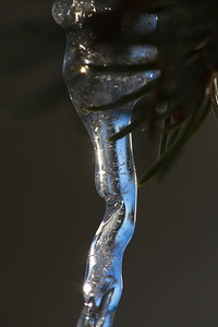 Istapp -  Icicle hanging from a spruce twig