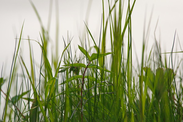 Grasses are growing at the shore of a river