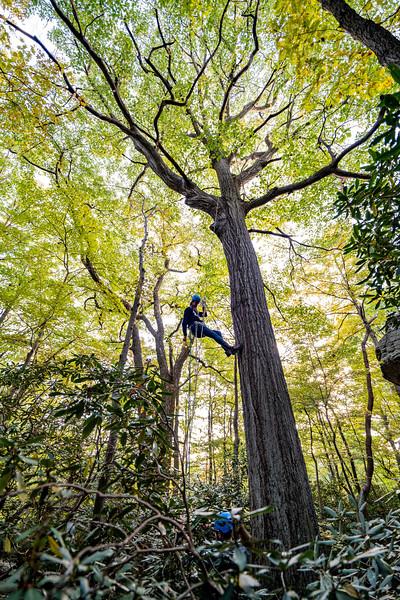 Climbing-Coopers-Rock-Adventure-WV-57