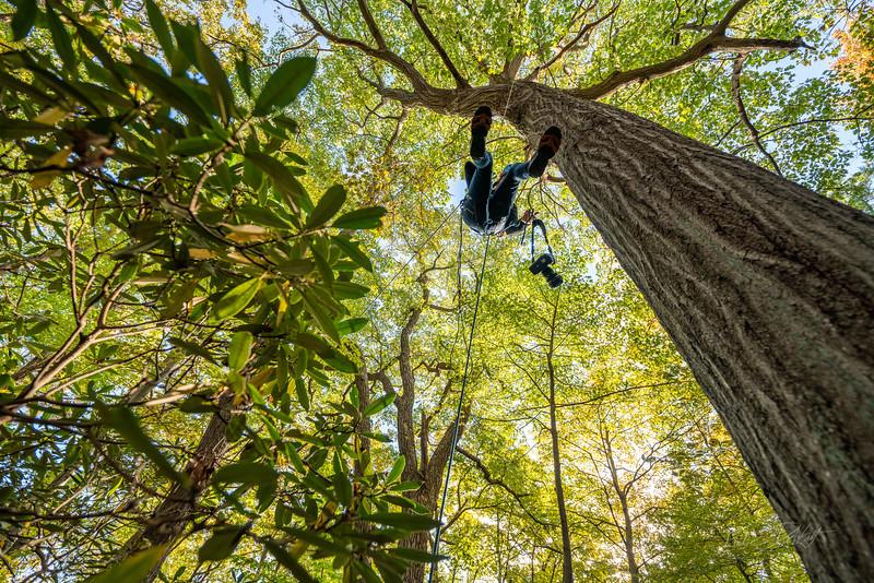 Climbing-Coopers-Rock-Adventure-WV-64