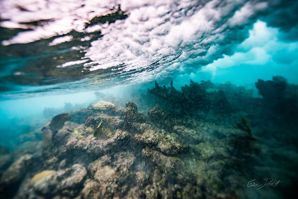 Arrecife-Francisco I-Madero-Snorkeling-Playa-del-carmen-Mexico-Gabe-DeWitt-528