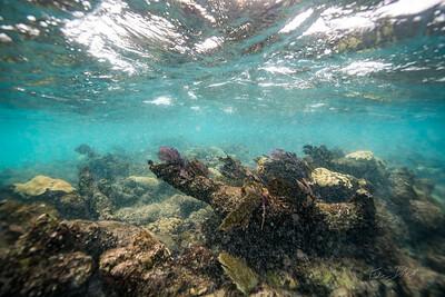 Arrecife-Francisco I-Madero-Snorkeling-Playa-del-carmen-Mexico-Gabe-DeWitt-22