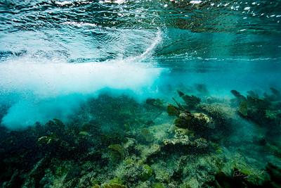 Arrecife-Francisco I-Madero-Snorkeling-Playa-del-carmen-Mexico-Gabe-DeWitt-260
