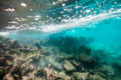 Arrecife-Francisco I-Madero-Snorkeling-Playa-del-carmen-Mexico-Gabe-DeWitt-28