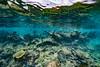 Arrecife-Francisco I-Madero-Snorkeling-Playa-del-carmen-Mexico-Gabe-DeWitt-249
