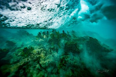 Arrecife-Francisco I-Madero-Snorkeling-Playa-del-carmen-Mexico-Gabe-DeWitt-356