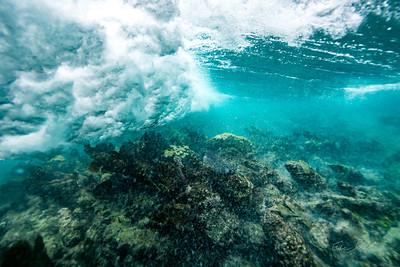 Arrecife-Francisco I-Madero-Snorkeling-Playa-del-carmen-Mexico-Gabe-DeWitt-87