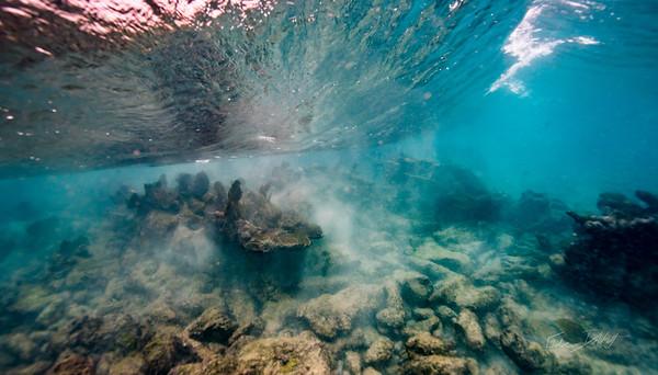 Arrecife-Francisco I-Madero-Snorkeling-Playa-del-carmen-Mexico-Gabe-DeWitt-41