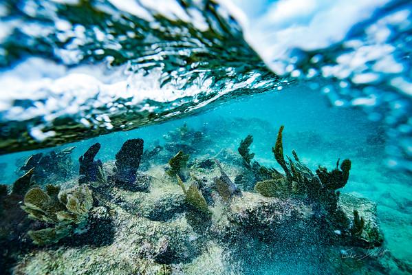 Arrecife-Francisco I-Madero-Snorkeling-Playa-del-carmen-Mexico-Gabe-DeWitt-205