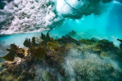 Arrecife-Francisco I-Madero-Snorkeling-Playa-del-carmen-Mexico-Gabe-DeWitt-141
