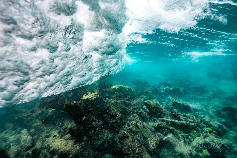 Arrecife-Francisco I-Madero-Snorkeling-Playa-del-carmen-Mexico-Gabe-DeWitt-86