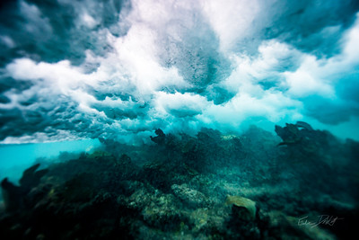 Arrecife-Francisco I-Madero-Snorkeling-Playa-del-carmen-Mexico-Gabe-DeWitt-450