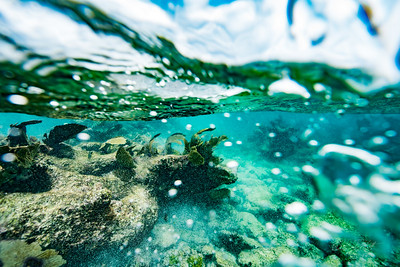 Arrecife-Francisco I-Madero-Snorkeling-Playa-del-carmen-Mexico-Gabe-DeWitt-199