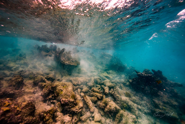 Arrecife-Francisco I-Madero-Snorkeling-Playa-del-carmen-Mexico-Gabe-DeWitt-40