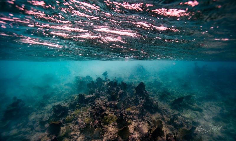 Arrecife-Francisco I-Madero-Snorkeling-Playa-del-carmen-Mexico-Gabe-DeWitt-37