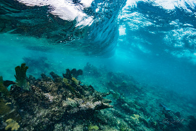 Arrecife-Francisco I-Madero-Snorkeling-Playa-del-carmen-Mexico-Gabe-DeWitt-196