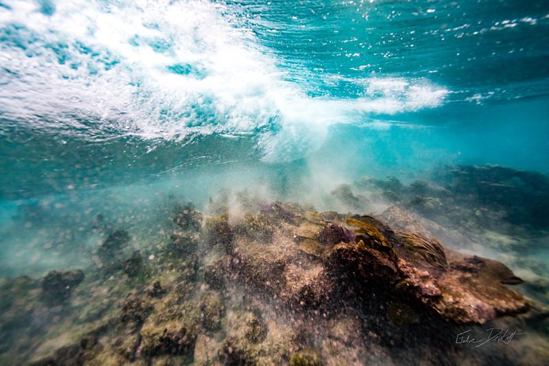 Arrecife-Francisco I-Madero-Snorkeling-Playa-del-carmen-Mexico-Gabe-DeWitt-46