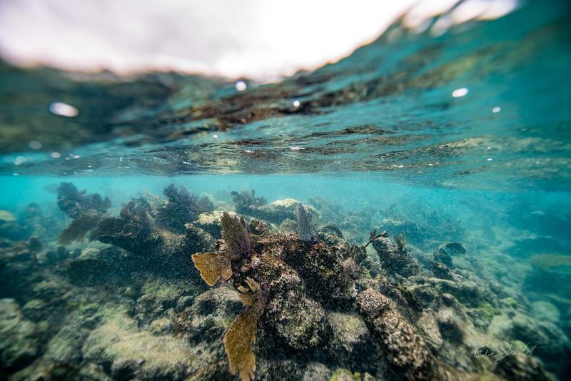 Arrecife-Francisco I-Madero-Snorkeling-Playa-del-carmen-Mexico-Gabe-DeWitt-23