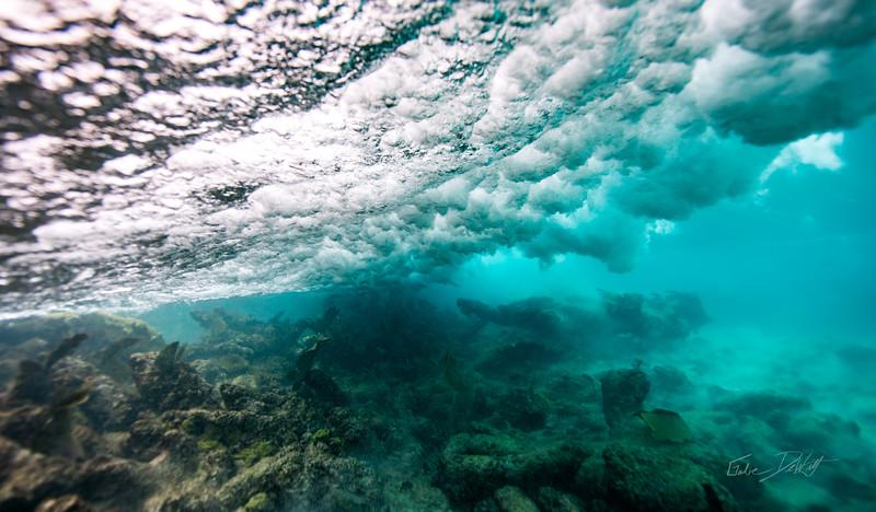 Arrecife-Francisco I-Madero-Snorkeling-Playa-del-carmen-Mexico-Gabe-DeWitt-29