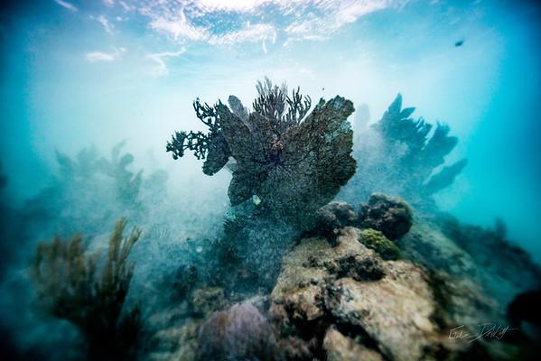 Arrecife-Francisco I-Madero-Snorkeling-Playa-del-carmen-Mexico-Gabe-DeWitt-563