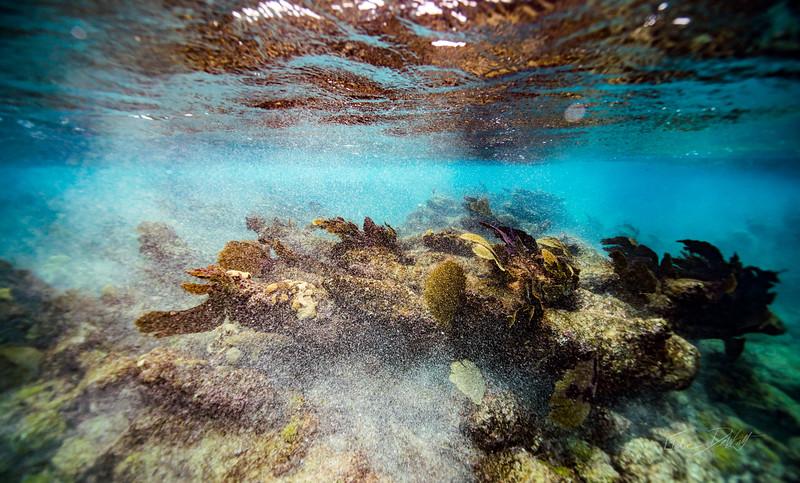 Arrecife-Francisco I-Madero-Snorkeling-Playa-del-carmen-Mexico-Gabe-DeWitt-34
