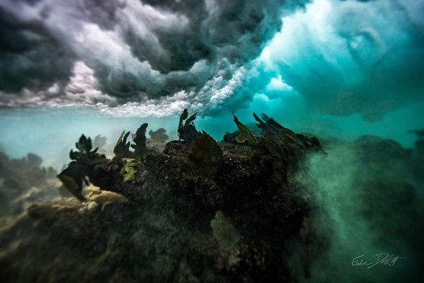 Arrecife-Francisco I-Madero-Snorkeling-Playa-del-carmen-Mexico-Gabe-DeWitt-366