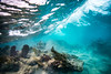 Arrecife-Francisco I-Madero-Snorkeling-Playa-del-carmen-Mexico-Gabe-DeWitt-414