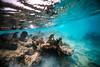Arrecife-Francisco I-Madero-Snorkeling-Playa-del-carmen-Mexico-Gabe-DeWitt-412