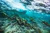 Arrecife-Francisco I-Madero-Snorkeling-Playa-del-carmen-Mexico-Gabe-DeWitt-215