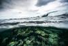Arrecife-Francisco I-Madero-Snorkeling-Playa-del-carmen-Mexico-Gabe-DeWitt-524