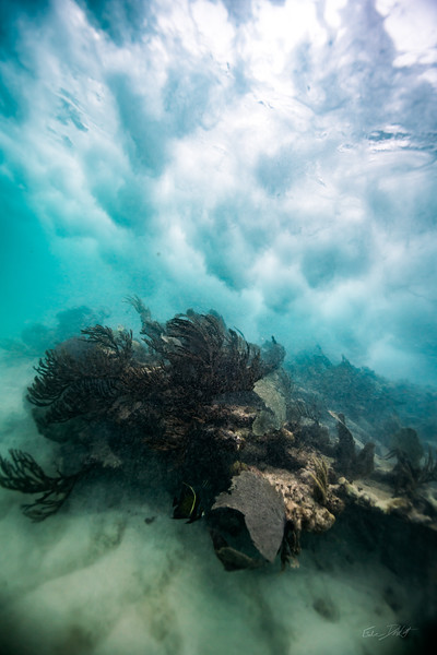Arrecife-Francisco I-Madero-Snorkeling-Playa-del-carmen-Mexico-Gabe-DeWitt-579