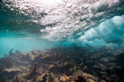 Arrecife-Francisco I-Madero-Snorkeling-Playa-del-carmen-Mexico-Gabe-DeWitt-12