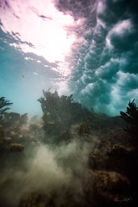 Arrecife-Francisco I-Madero-Snorkeling-Playa-del-carmen-Mexico-Gabe-DeWitt-555