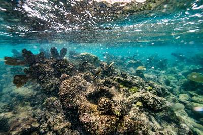 Arrecife-Francisco I-Madero-Snorkeling-Playa-del-carmen-Mexico-Gabe-DeWitt-76