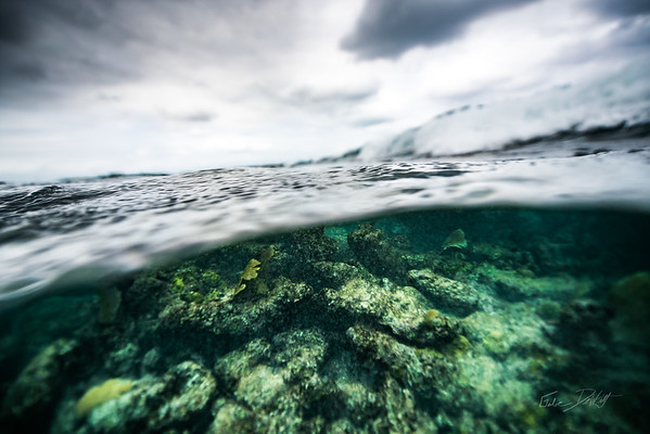 Arrecife-Francisco I-Madero-Snorkeling-Playa-del-carmen-Mexico-Gabe-DeWitt-525