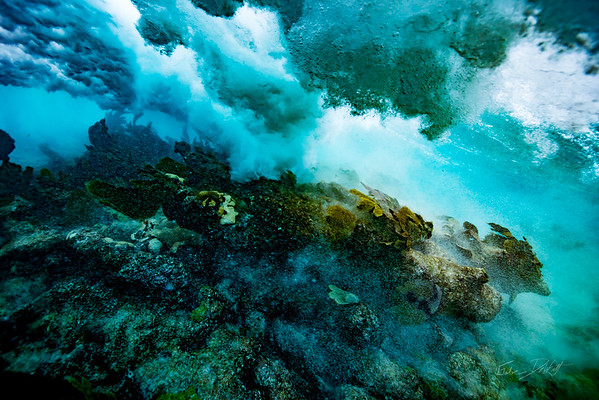 Arrecife-Francisco I-Madero-Snorkeling-Playa-del-carmen-Mexico-Gabe-DeWitt-267